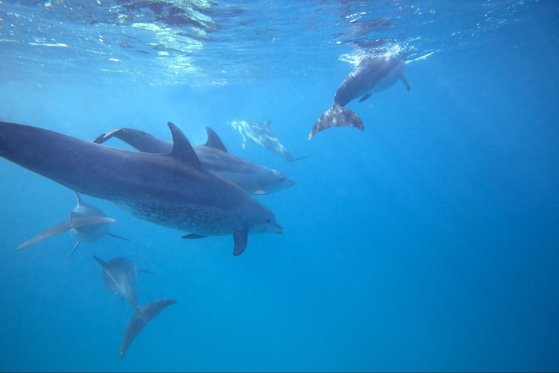Dolphin Island zanzibar accommodations deals