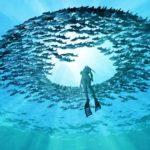 Zanzibar Marine Life